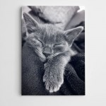 Uyuyan Kedi Kanvas Tablo