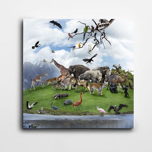Yeşillikte Hayvanlar Kare Kanvas Tablo