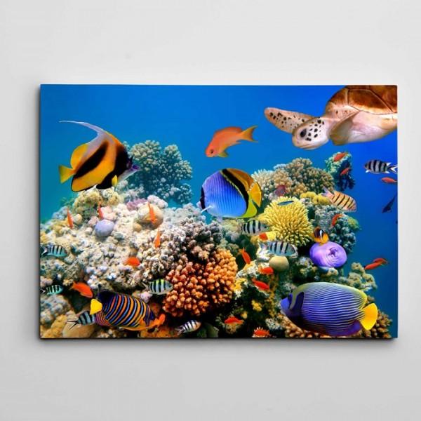 Renkli Balıklar Kanvas Tablo